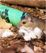 protect your yard mice